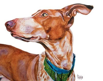 Podenco Canario, Ibizian hound, sighthounds, hounds, Greyhound ,Art print size 8x12 inch