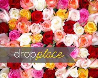 Backdrop Valentine's Day Drops Stop and Smell the Roses Photo Background (Material and Size Options Available)