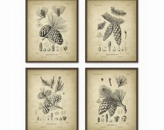 Pine Cones Wall Art Prints Set of 4 - Antique Woodland Illustrations - Botanical Home Decor - Pine Cone Posters - Forest Art Print (AB364)