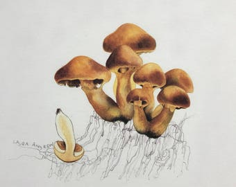 Mushroom PRINT in mount 37x37 By Laura Andrew - yellow Toadstools ART