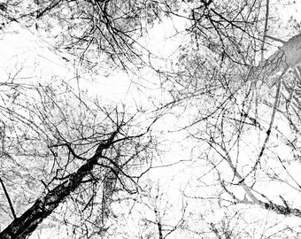 Neutral home decor in black and white From the series NATURE GRAPHICS Trees Original signed fine art photo print 6x6 inches