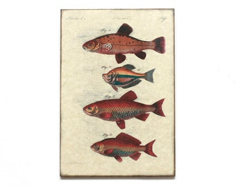 "Retro Wood Wall Art 8x12"" 20x30 cm, Fish Educational Board, Natural History, Wall Hanger, Room Decor, Shabby chic, Nursery room art"