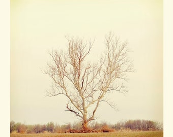Grow Grow Grow Square Fine Art Print Tree Landscape Winter Stark Neutral Home Decor Wholesale