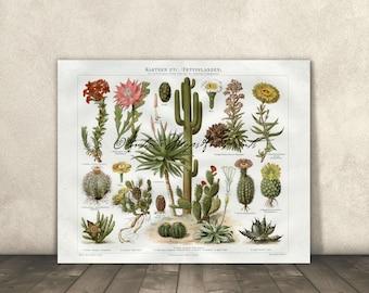 Botanical Cactus Flowers Saguaro Poster Print 8x10 to 30x40 1800s Repro