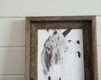 Black and White Donkey Rustic Barnwood Framed Art Original Photography