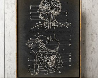 ANATOMY POSTER Digestive System Print Chart, Anatomical Drawing, Anatomy Print, Scientific Illustration, Medical Art, Doctor, Anatomy Art