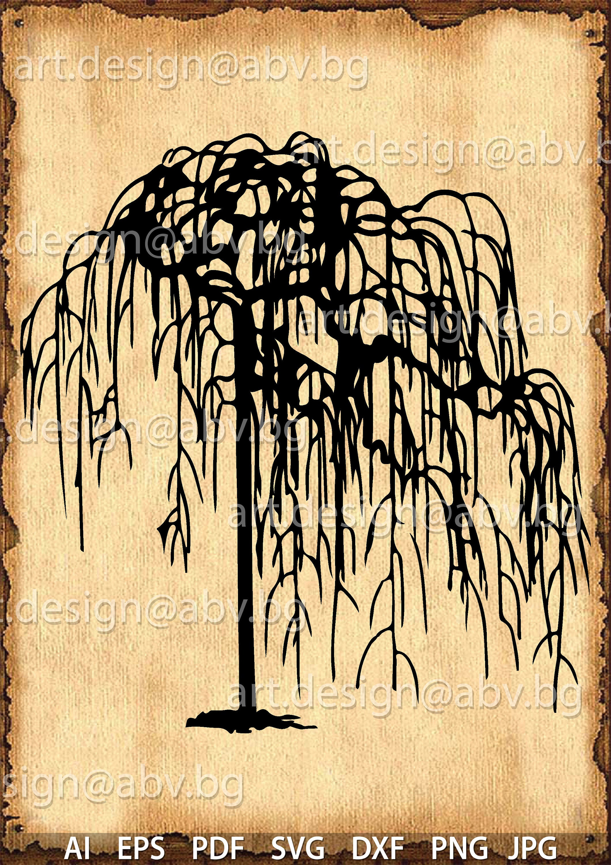 Vector weeping WILLOW /Salix babylonica/ tree AI PNG pdf
