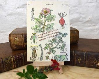 Poetry postcard, haiku postcard, seasons poem, postcard, letterpress print