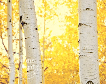 Golden Aspen Leaves - Digital Download - Cheerful and Bright Fine Art Photography