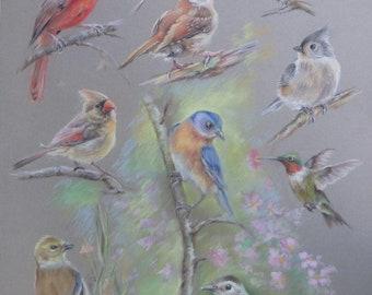 NATIVE BIRDS Custom Wildlife  Collage Original Pastel Drawing Illustration of North American BIRDS Songbirds Hummingbirds Tit Bluebird