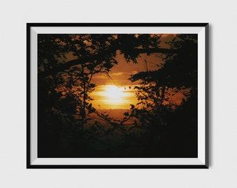 A3 SUNSET PRINT - ASHRIDGE