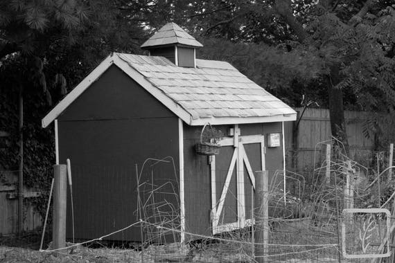 """""""Chicken Shed,"""" Lewis Oliver Farm, Northport, New York, 2016."""