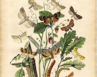 Butterfly art, Nature print, Butterfly decor, Nature picture, Butterfly print, Nature decor, Wall decor butterfly, Nature art, 162