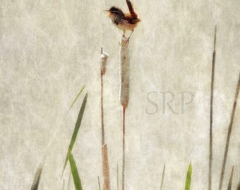 Live Out Loud - PHOTO PRINT - Marsh Wren on Cattail