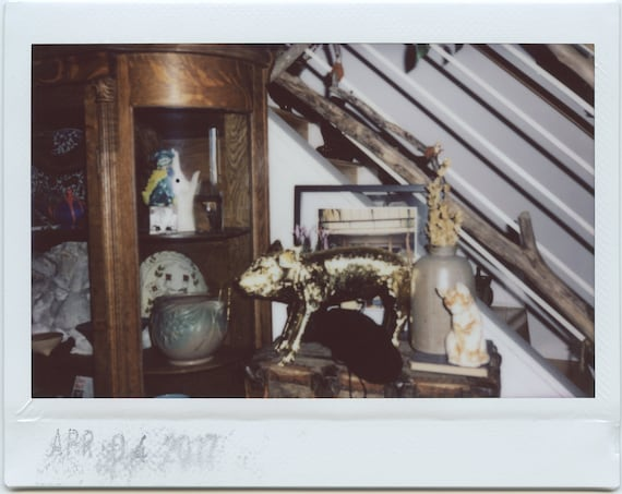 Test Shot of my Golden Pig  (Last of the Fuji Instax Wide Shots)