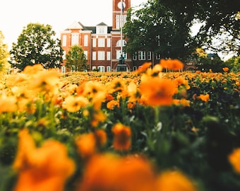 Tillman Hall Orange Flower Bokeh