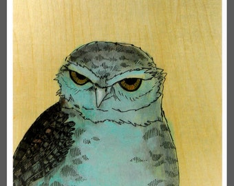 Glaring Burrowing Owl bird art PRINT no. 31 c-print 8 x 8