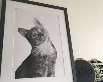 Cat Sceenprint