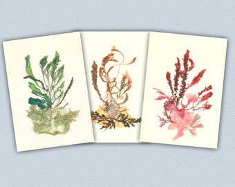 Seaweed art, Pressed seaweed, 3 collage seaweed pressings, botanicals Print, Botanical seaweed, beach cottage, nautical decor, coastal decor