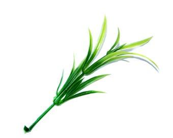 15 Pieces Podocarpus Sprigs - Faux Succulent - Artificial Succulents