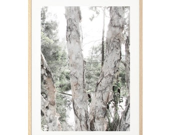 PAPERBARK FOREST black and white photography wall art print