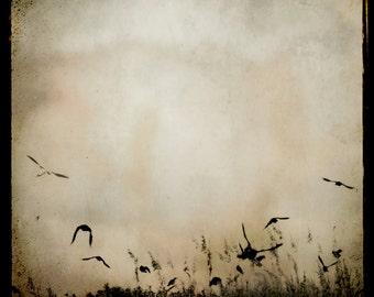 Crow Photography, TTV Crow print , Raven Print, Dark brown beige cream Wall Art, Nature Crows ttv photograph 8x8