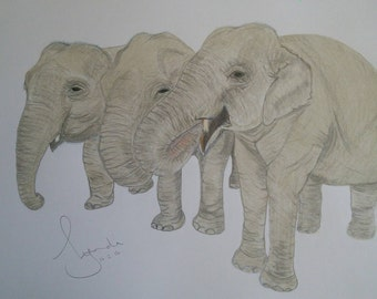 A trio of Young Elephants - a limited edition print of a coloured pencil drawing.