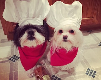 Chef Dog Costume Hat and red scarf