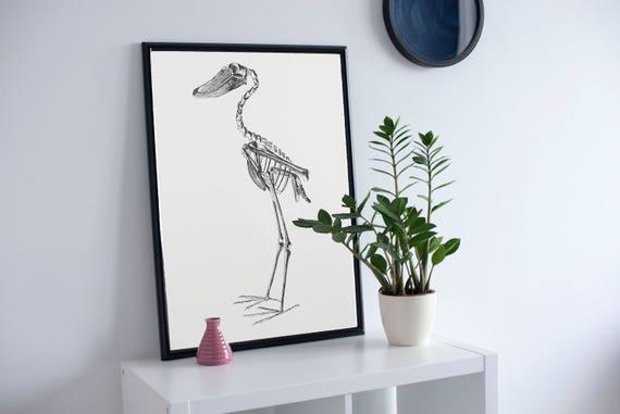 Vogel Anatomie Vogel Skelett wissenschaftlichen Kunst