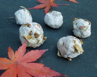 Japanese Maple seed bombs, Seed bombs, plantable paper, eco friendly gift, bonsai seed