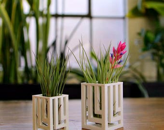 """Unique Breathing """"Knight"""" Air Plant Holder Air Plant Container Air Plant Vase"""