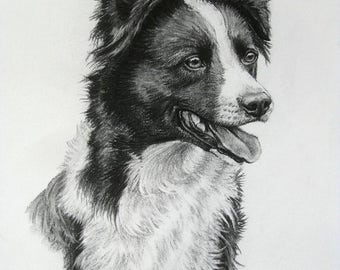 Border Collie working sheepdog dog art dog gift dog print fine art Limited Edition print from an original charcoal drawing by H Irvine