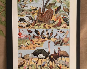 Board naturalist, history & natural sciences - Zoology Bird 2 - Larousse