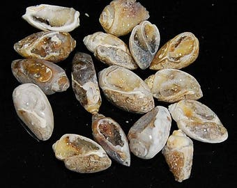 145 CTS aaa 100% natural wholesale lot Vintage FOSSIL SHELL druzy piece 16 loose gemstone cabochon size=15 to 20 mm (approx)