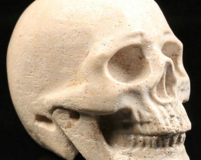 Coral Fossil Carved Skull  #089