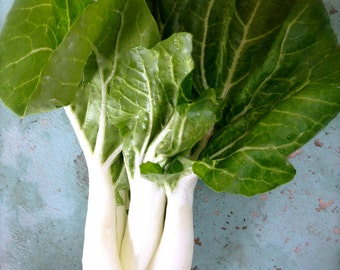 Bok Choy Shanghai Green Rare Seeds Grown To Organic Standards