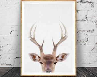 Deer Print, Deer Head and Antlers, Printable Wall Art Poster, Large, Digital Download, Woodlands Nursery Decor, Modern Minimalist