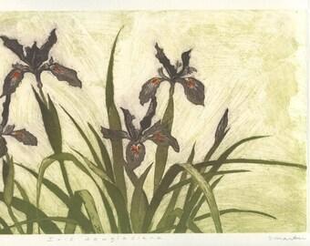 Native California Irises, Original Etching
