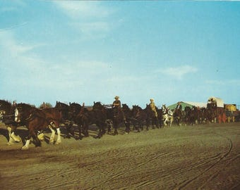 Vintage 1950s Postcard Saskatchewan SK Canada Horse Team Freighter Wagon Western Development Museum Card Photochrome Postally Unused