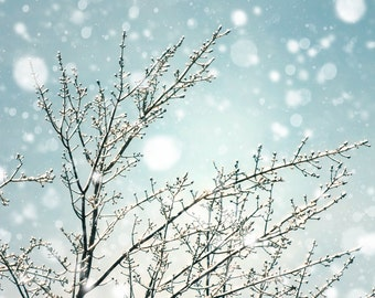 Falling snow snow photo bare trees icy branches winter snow snowstorm bokeh snowflakes fat snowflake pale blue muted tones neutrals