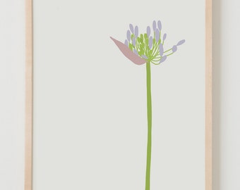 Fine Art Print. Agapanthus. June 24, 2015.