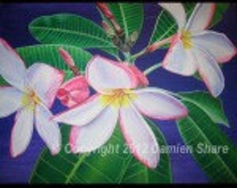 Plumeria, plumeria art prints, tropical plumeria flowers, frangipani art, Hawaiian lei flowers, white plumeria flowers, plumeria prints