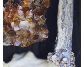 Citrine And Bone - Gemstone - Jewel Print - Antler Art - Fine Art Photograph - Nature Photography - Crystal Print - Nature Print - Oversized