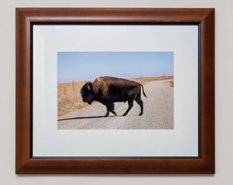 American Bison, Framed Print, Wall Art