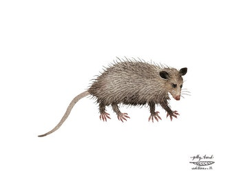 Opossum Print, watercolor reproduction, giclee print, marsupials, animal illustration, critter art
