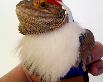 Bearded Dragon Costume! Garden Gnome!