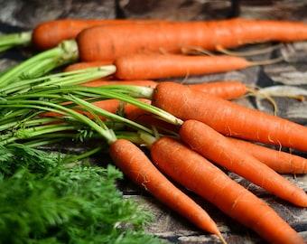 Carrot seeds  (Daucus carota)