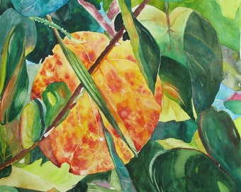 Sea Grape Leaves, an original watercolor on paper, image 16 x 16. Yvonne Wagner. Sea Grape.  Beach. Tropical. Free shipping within the USA.