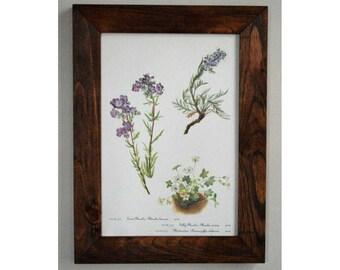 Framed 1950's Botanical Print