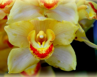 ACEO Orange and Yellow Orchid